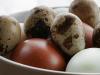 gambar 2 cara sukses berdagang telur
